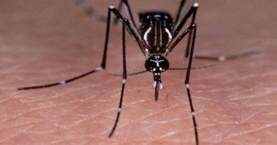 Boletín epidemiológico revela reducción significativa en casos de dengue